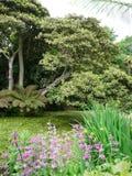 Jardines tropicales en los jardines perdidos de Heligan Fotografía de archivo libre de regalías