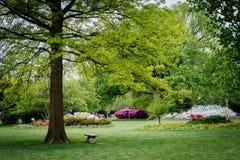 Jardines y árboles en Sherwood Gardens Park, en Guilford, Baltimo Imágenes de archivo libres de regalías