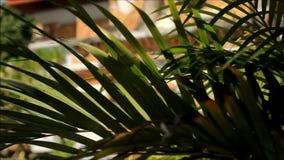 Jardines y plantas tropicales en los anillos de un templo budista tailandés en Chiang Mai almacen de metraje de vídeo