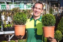 Jardinier à la jardinerie posant avec des boxtrees photographie stock libre de droits