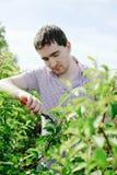 Jardinier photos libres de droits