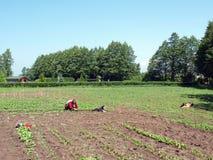 jardinier Images libres de droits