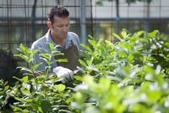Jardinier au travail Images stock