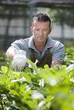 Jardinier au travail Images libres de droits
