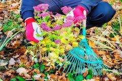 Jardinier aux fleurs d'automne photographie stock