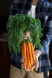 Jardinier avec des carottes photos libres de droits