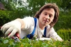 Jardinier coupant un buisson image stock