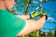 Jardinier Creating Green Wall images libres de droits