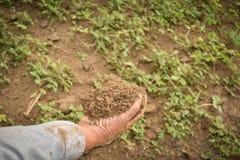 Jardinier d'expert tenant l'engrais photographie stock libre de droits