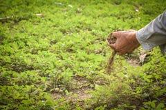 Jardinier d'expert tenant l'engrais image stock