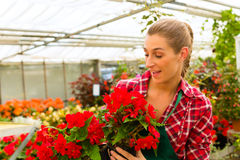 Jardinier dans son fleuriste de maison verte photo stock