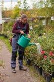 Jardinier de femme arrosant les fleurs dans le jardin Images stock