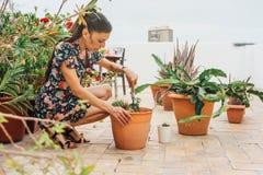 Jardinier de femme, plantant l'usine de cactus dans un pot images stock