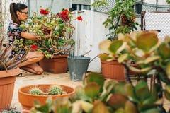Jardinier de femme, plantant l'usine de cactus dans un pot photographie stock libre de droits