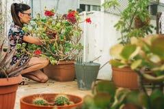 Jardinier de femme, plantant l'usine de cactus dans un pot photographie stock