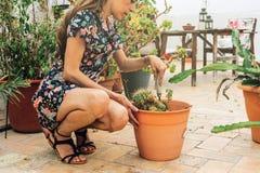 Jardinier de femme, plantant l'usine de cactus dans un pot image stock
