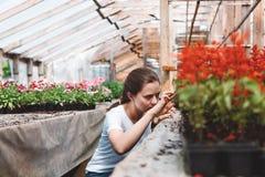 Jardinier de femme professionnelle travaillant en serre chaude photo stock