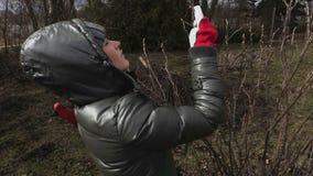 Jardinier de femme vérifiant des buissons de fruit banque de vidéos