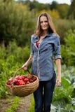 Jardinier de jeune femme jugeant un panier plein du paprika rouge photographie stock