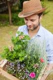 Jardinier de sourire heureux jugeant la boîte en bois pleine des jeunes plantes de fleur dans pots Photographie stock