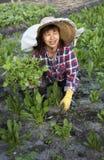 Jardinier du marché de femme images stock