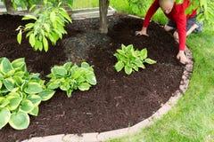 Jardinier effectuant le travail de paillis autour de la maison image libre de droits