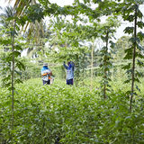 Jardinier en Thaïlande Photos stock