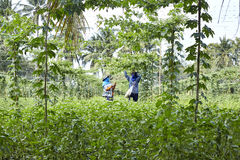 Jardinier en Thaïlande Photo stock