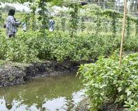Jardinier en Thaïlande Photographie stock libre de droits