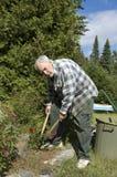 Jardinier et roses aînés Images libres de droits