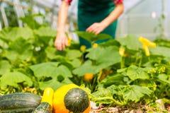 Jardinier féminin dans le jardin ou la pépinière du marché photographie stock libre de droits