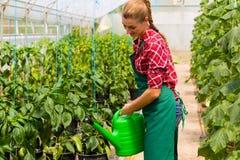 Jardinier féminin dans le jardin ou la pépinière du marché photo libre de droits