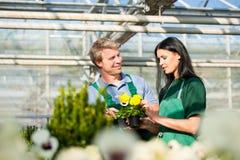 Jardinier féminin et masculin dans le jardin ou la pépinière du marché Image stock