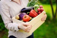 Jardinier féminin tenant la caisse en bois avec les légumes organiques frais de la ferme photos stock