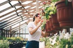 Jardinier f?minin travaillant dans le jardin avec des fleurs image libre de droits