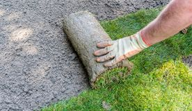 Jardinier installant des rouleaux d'herbe de gazon images libres de droits