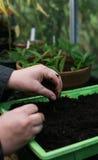 Jardinier organique Photographie stock libre de droits