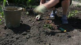 Jardinier With Plant banque de vidéos