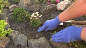 Jardinier plantant la jeune plante de la fleur clips vidéos