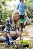 Jardinier plantant tandis qu'homme travaillant à l'arrière-plan Image libre de droits