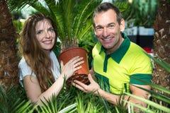 Jardinier présent le palmier mis en pot à la crèche photos libres de droits