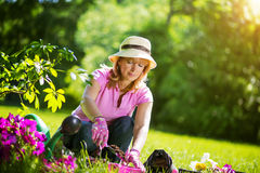 Jardinier prenant soin de ses usines dans un jardin Photos libres de droits