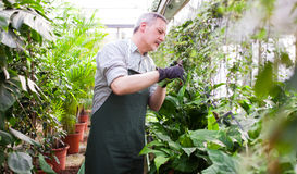 Jardinier équilibrant une usine Photo libre de droits