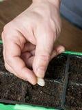 Jardinier, semant des usines dans un pot Photographie stock