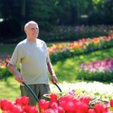 Jardinier supérieur au travail Image libre de droits
