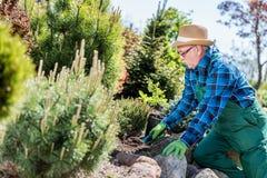 Jardinier supérieur creusant dans un jardin Photo libre de droits
