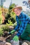 Jardinier supérieur creusant dans un jardin Images libres de droits