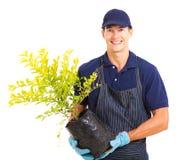 Jardinier tenant l'usine image libre de droits