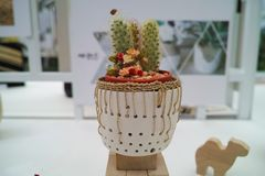 Jardiniere кактуса Стоковая Фотография RF