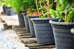 Jardiniere Zdjęcia Royalty Free